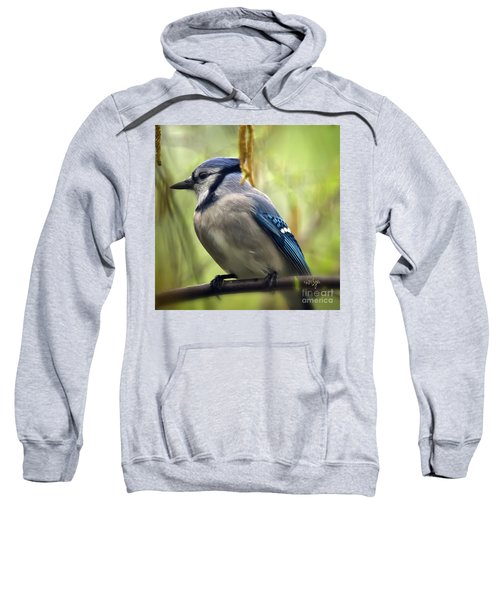 Blue Jay On A Misty Spring Day - Square Format Sweatshirt by Lois Bryan