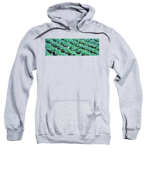 Cabbage, Yamhill Co, Oregon, Usa Sweatshirt by Panoramic Images