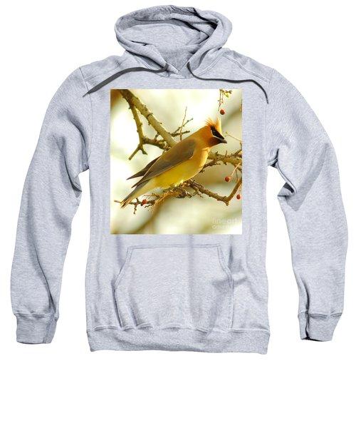 Cedar Waxwing Sweatshirt by Robert Frederick