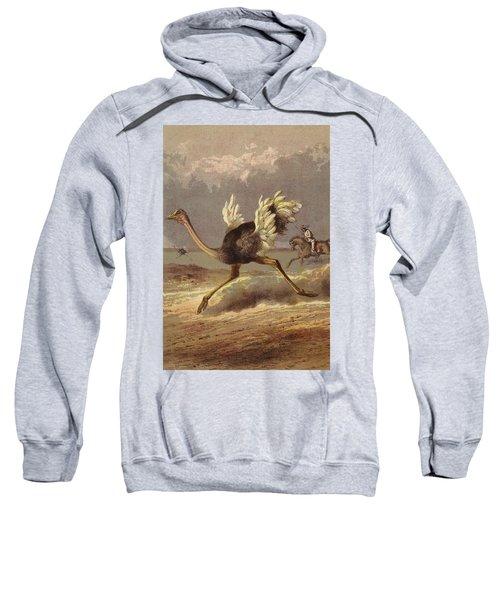 Chasing The Ostrich Sweatshirt by English School