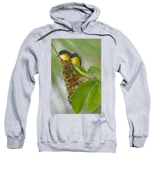 Close-up Of Two Common Tody-flycatchers Sweatshirt by Panoramic Images