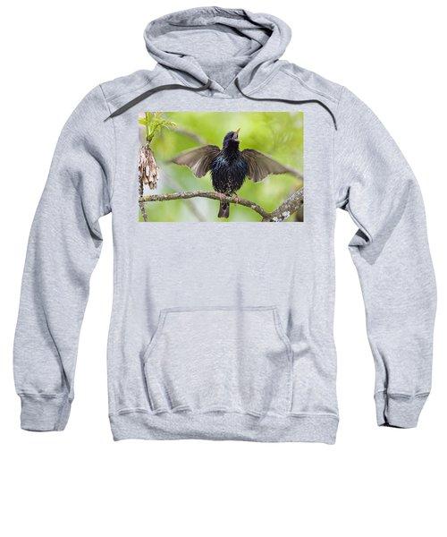 Common Starling Singing Bavaria Sweatshirt by Konrad Wothe