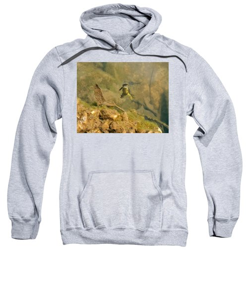 Eastern Newt In A Shallow Pool Of Water Sweatshirt by Chris Flees