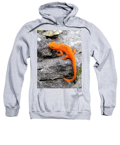 Orange Julius The Eastern Newt Sweatshirt by Lori Pessin Lafargue
