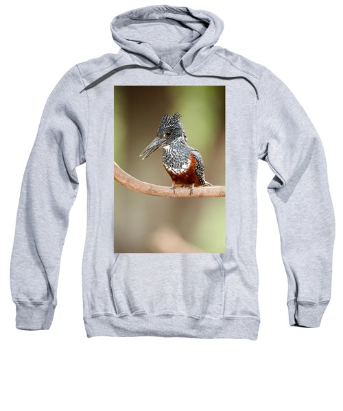 Giant Kingfisher Megaceryle Maxima Sweatshirt by Panoramic Images