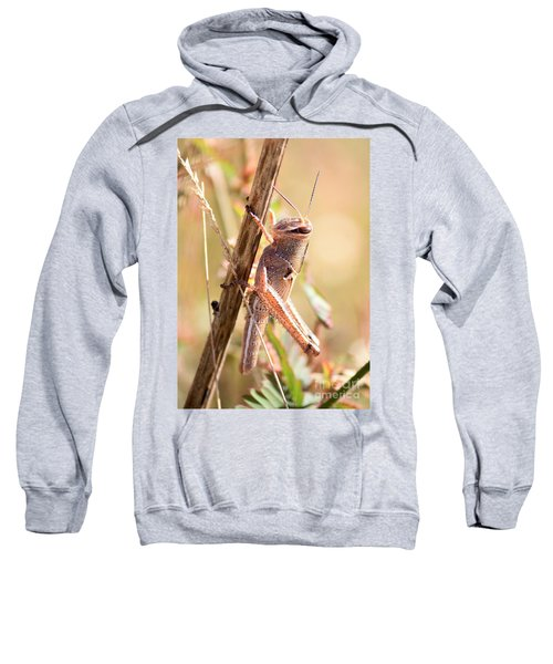 Grasshopper In The Marsh Sweatshirt by Carol Groenen