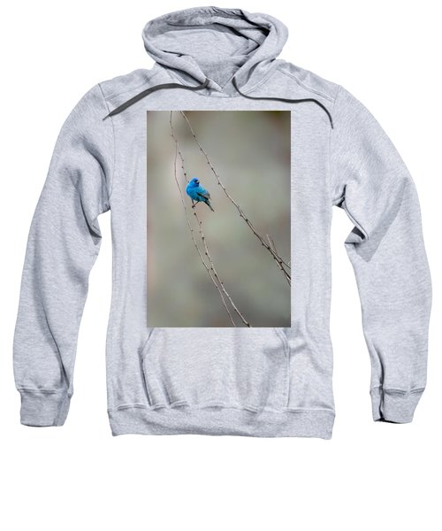 Indigo Bunting Sweatshirt by Bill Wakeley