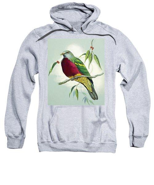 Magnificent Fruit Pigeon Sweatshirt by Bert Illoss