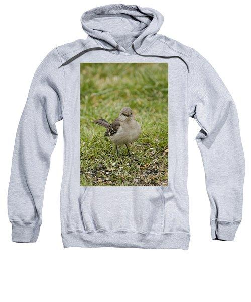 Northern Mockingbird Sweatshirt by Heather Applegate