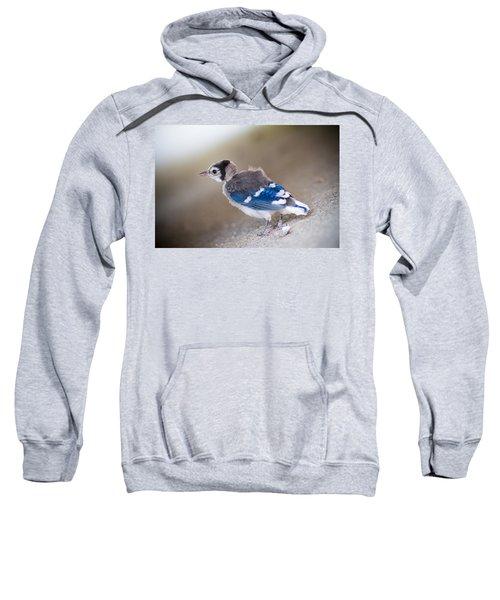 one day...I will fly Sweatshirt by Shane Holsclaw