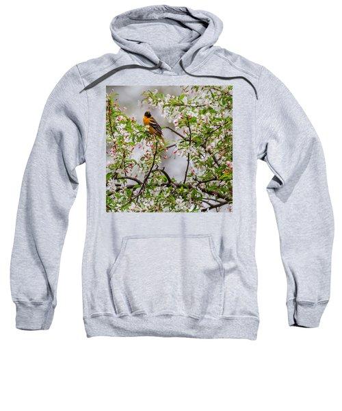 Oriole In Crabapple Tree Square Sweatshirt by Bill Wakeley