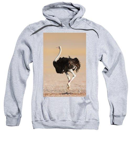 Ostrich Sweatshirt by Johan Swanepoel