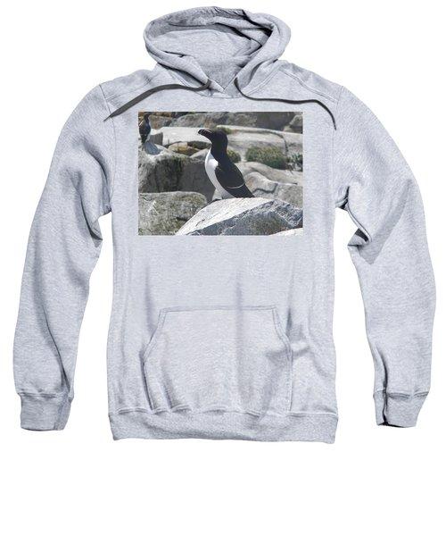 Razorbill Sweatshirt by James Petersen
