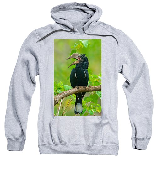 Silvery-cheeked Hornbill Perching Sweatshirt by Panoramic Images