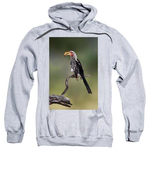 Southern Yellowbilled Hornbill Sweatshirt by Johan Swanepoel