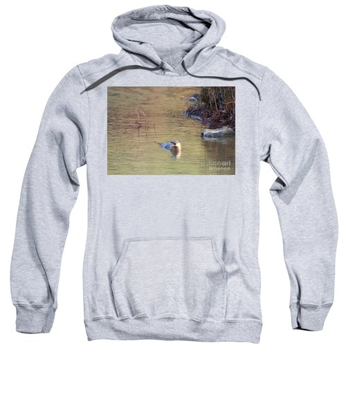 Sunrise Otter Sweatshirt by Mike Dawson