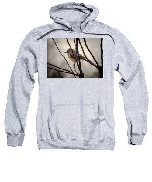 Tufted Titmouse Sweatshirt by Karen Wiles