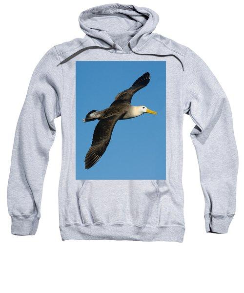 Waved Albatross Diomedea Irrorata Sweatshirt by Panoramic Images