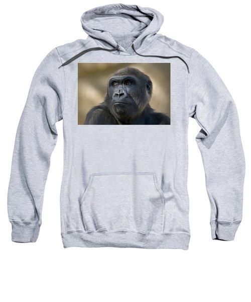 Western Lowland Gorilla Portrait Sweatshirt by San Diego Zoo