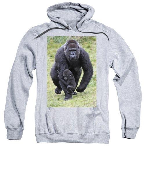 Western Lowland Gorilla Walking Sweatshirt by Duncan Usher