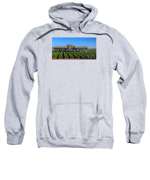 Winter Lettuce Harvest Sweatshirt by Robert Bales