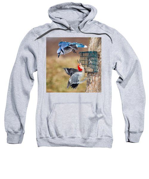 Woodpeckers And Blue Jays Square Sweatshirt by Bill Wakeley