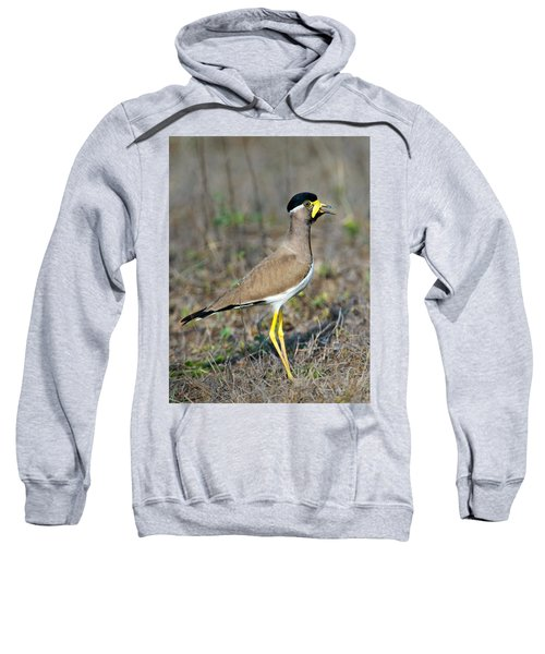 Yellow-wattled Lapwing Vanellus Sweatshirt by Panoramic Images