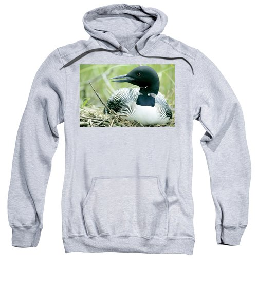 Common Loon, La Mauricie National Park Sweatshirt by Philippe Henry