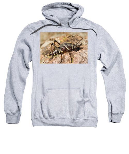 A Colorful Lubber Grasshopper Sweatshirt by Jack Goldfarb