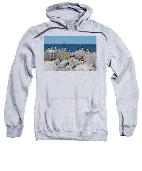 Auk Island Sweatshirt by Bruce J Robinson