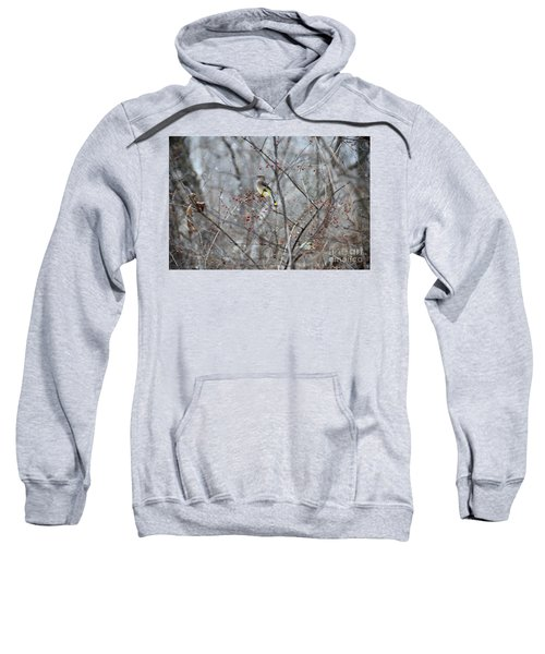 Cedar Wax Wing 3 Sweatshirt by David Arment