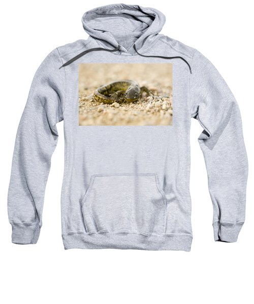 Close Up Tiger Salamander Sweatshirt by Mark Duffy