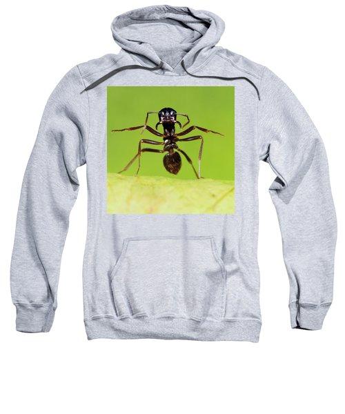 Japanese Slave-making Ant Polyergus Sweatshirt by Satoshi Kuribayashi