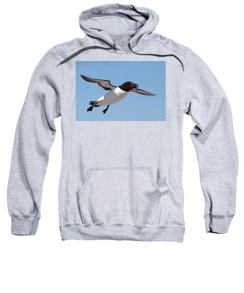 Razorbill In Flight Sweatshirt by Bruce J Robinson