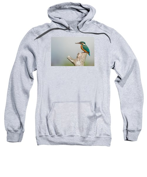 Kingfisher Sweatshirt by Paul Neville
