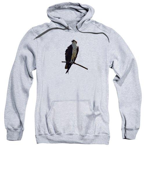 Osprey Sweatshirt by Deborah Good