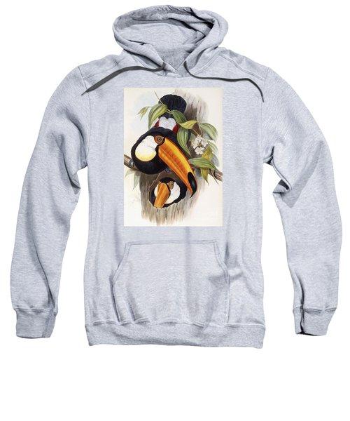 Toucan Sweatshirt by John Gould
