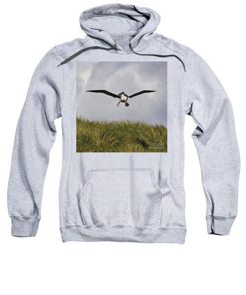 Black-browed Albatross Sweatshirt by Jean-Louis Klein & Marie-Luce Hubert