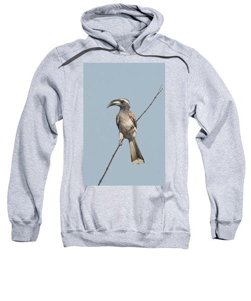African Grey Hornbill Tockus Nasutus Sweatshirt by Panoramic Images