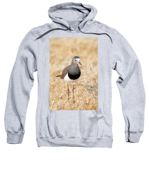 African Wattled Lapwing Vanellus Sweatshirt by Panoramic Images