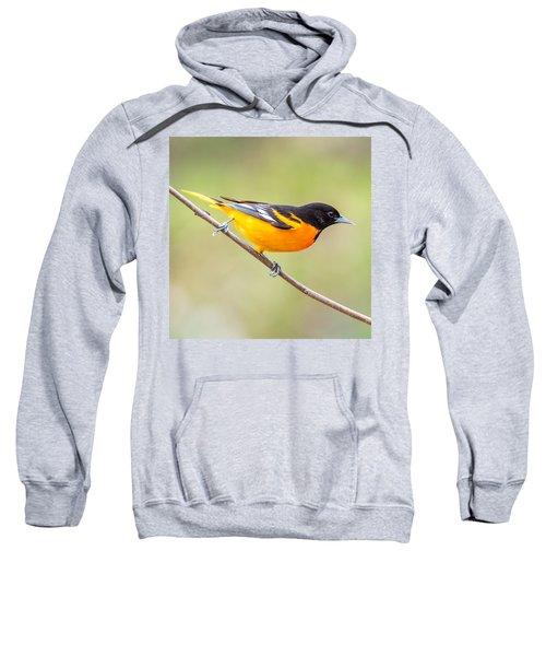 Baltimore Oriole Sweatshirt by Paul Freidlund