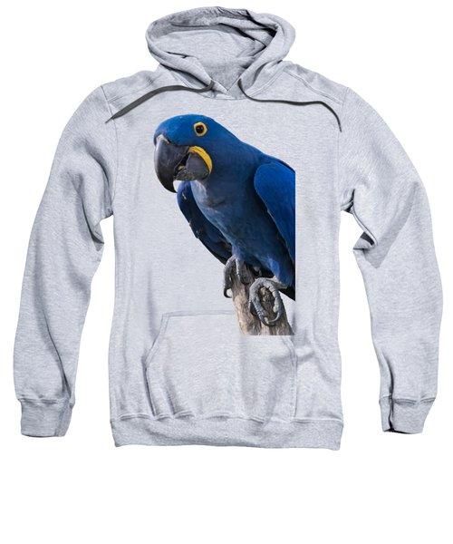 Blue Macaw Sweatshirt by Mark Myhaver