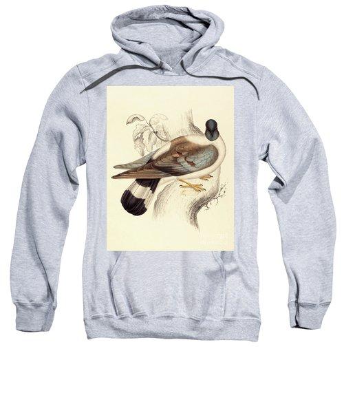 Columba Leuconota, Snow Pigeon Sweatshirt by Elizabeth Gould