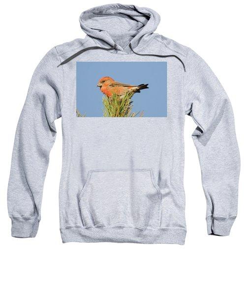 Crossbill Sweatshirt by Judd Nathan