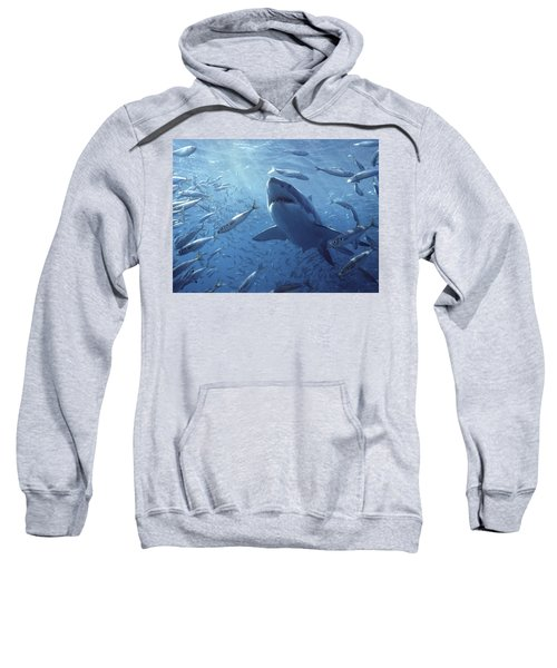 Great White Shark Carcharodon Sweatshirt by Mike Parry
