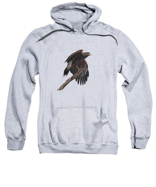 Harris Hawk - Transparent Sweatshirt by Nikolyn McDonald
