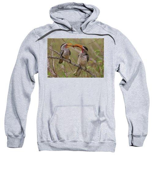 Hornbill Love Sweatshirt by Bruce J Robinson