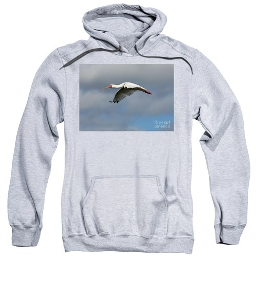 Ibis In Flight Sweatshirt by Carol Groenen