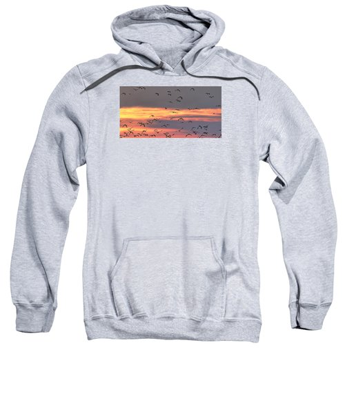 Lapwings At Sunset Sweatshirt by Jeff Townsend