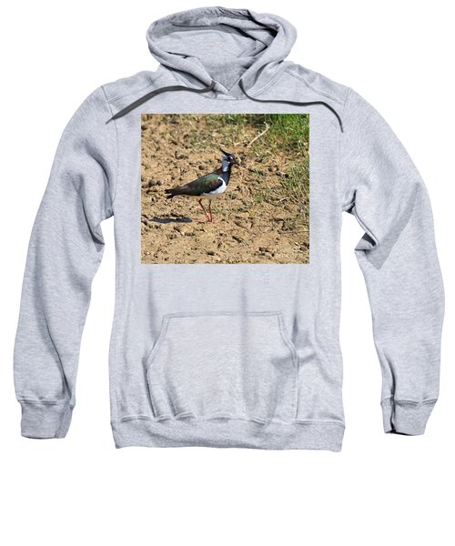 Northern Lapwing Sweatshirt by Louise Heusinkveld